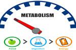 Factors Affecting Metabolism